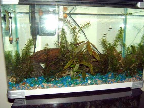10-gallon-fish-tank-lg.jpg