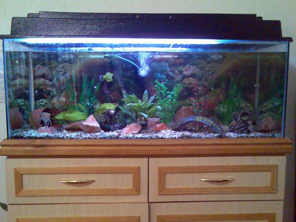 tropical fish tank decorations. is a community aquarium.