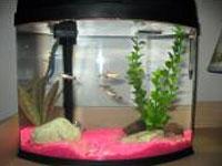 5 gallon aquarium