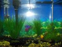 6 gallon aquarium
