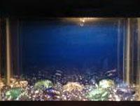 Quarantine Fish Tank
