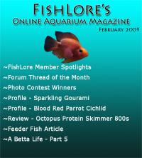 Aquarium Fish Magazine - February 2009