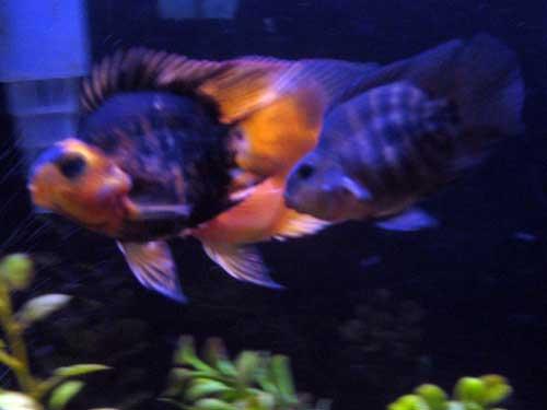 Orange Aquarium