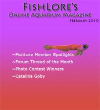 Aquarium Fish Magazine - February 2010