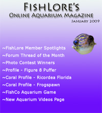 Aquarium Fish Magazine - January 2009