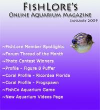 Aquarium Fish Magazine - January 2009