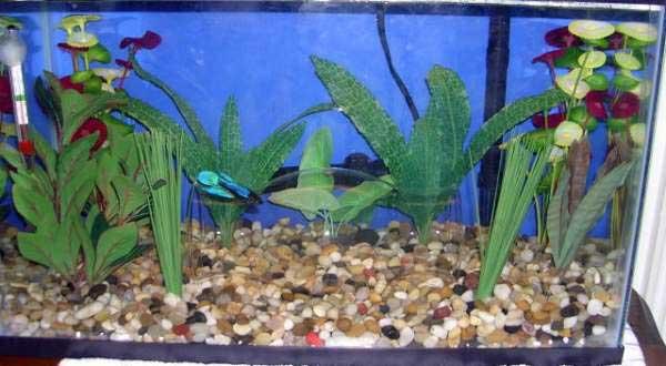 10 Gallon Betta Tank  10 Gallon Home Aquariums