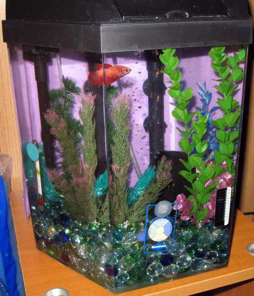 My Betta Fish Tank Betta aquarium
