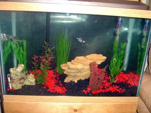 Member spotlight shawnie for How many gallons is my fish tank