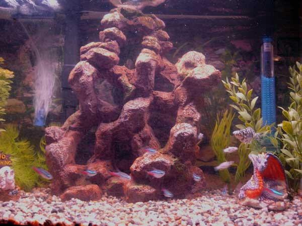 Member spotlight shaynab for 10 gallon fish tank heater