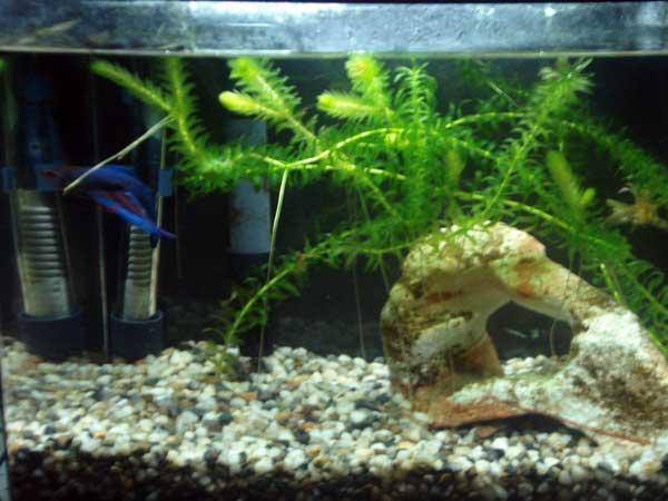 Member spotlight shaynab for Eclipse fish tank