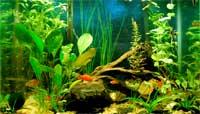 25 Gallon Aquarium