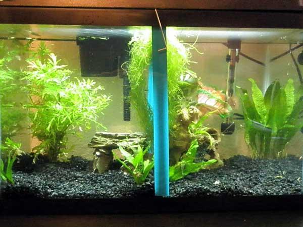 Member spotlight missmts for Betta fish tank temperature