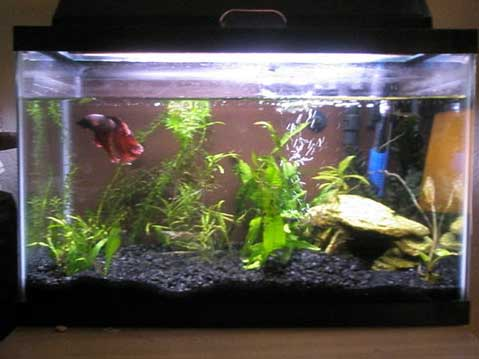 Member spotlight missmts for Fish tank pebbles