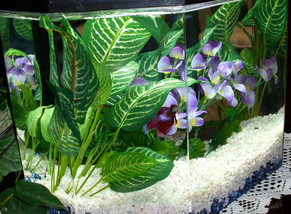 Member spotlight martinismommy for How much are betta fish at petco