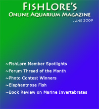 Aquarium Fish Magazine - June 2009