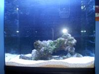 Red Sea Max Aquarium