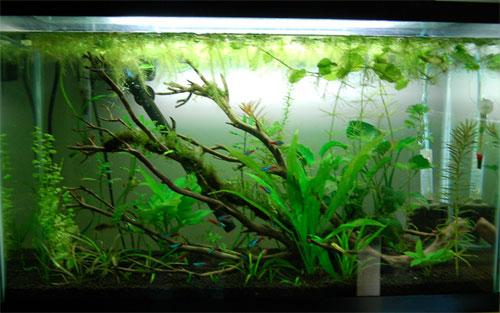 29 gallon aquarium