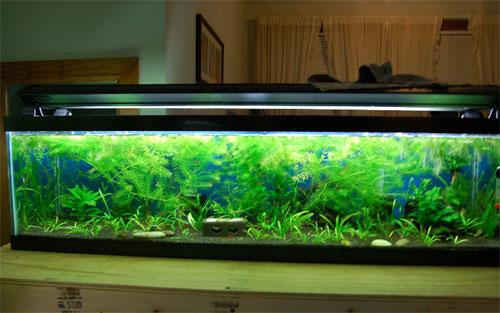 33 gallon aquarium
