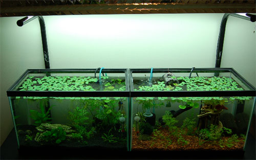 10 gallon aquariums