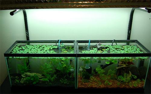 10 gallon aquariums