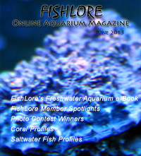 Fish and Aquarium Magazine - June 2013
