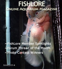 Aquarium Fish Magazine - June 2014