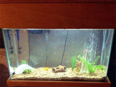 30 Gallon Freshwater Aquarium