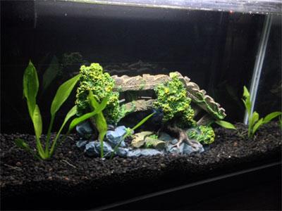 6 Gallon Planted Tank