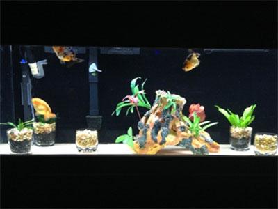 Planted Fish Tank
