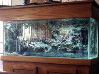 90 Gallon Freshwater Aquarium