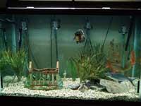 150 Gallon Aquarium