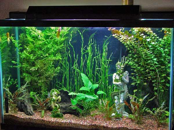 Freshwater Fish 6 Gallon Tank Gallon Bowfront Freshwater