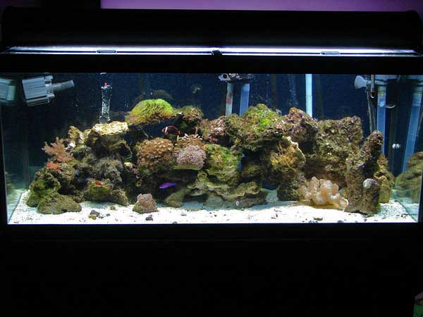 Member spotlight gozer 1 for Saltwater fish for 10 gallon tank