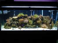75 Gallon Saltwater Aquarium