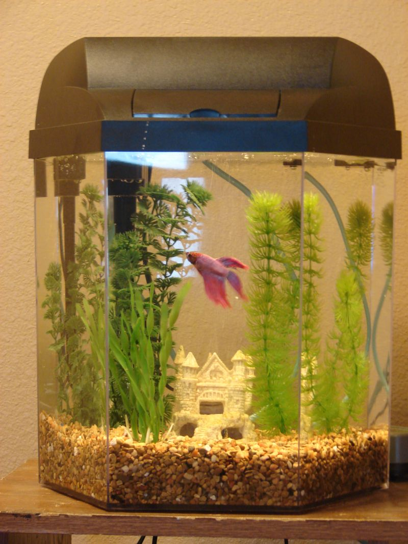 Gallon Hex Betta Tank