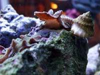Saltwater Snail