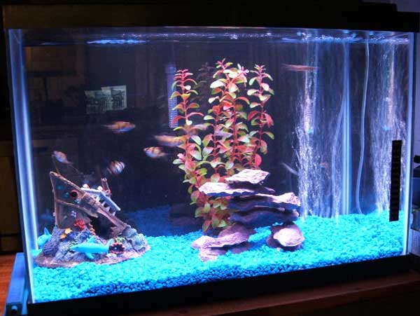 Member spotlight sgould for 20 gallon saltwater fish tank