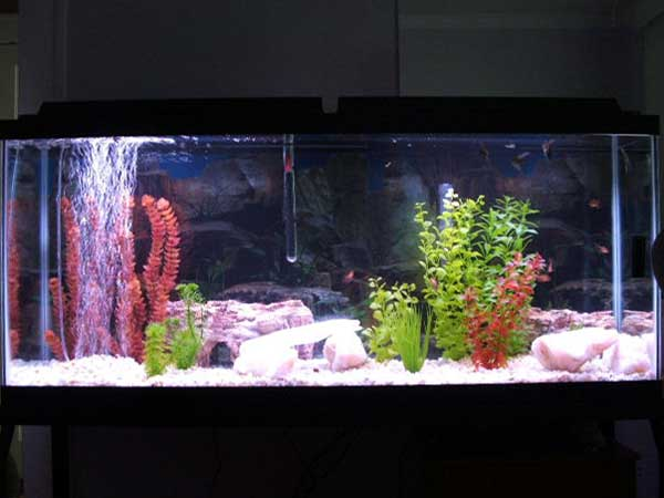 55 fish tank 55 gallon freshwater planted fish tank for 55 gallon fish tank for sale