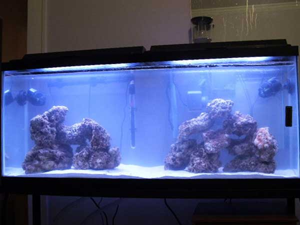 Member spotlight sgould for 55 gallon aquarium decoration ideas