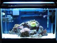 29 Gallon Saltwater Aquarium