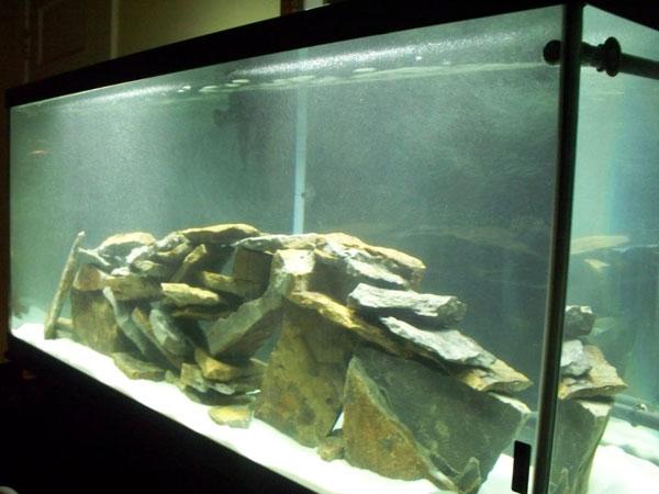 Member spotlight choffman for 125 gallon fish tank