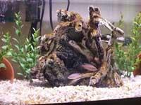 16 gallon fish tank