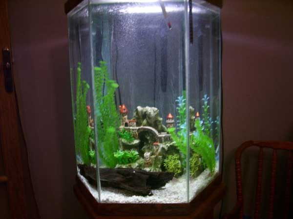 30 gallon fish tank hexagon 30 gallon hexagon fish tank