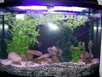 36 Gallon Aquarium