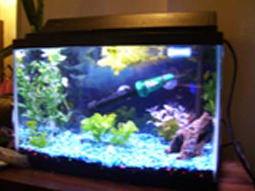 Member spotlight redlessi for 10 gallon fish tanks