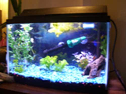 Member Spotlight - redlessi 10 Gallon Home Aquariums