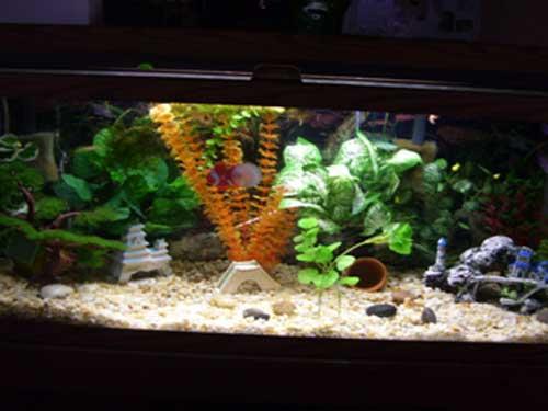 Member spotlight redlessi for 35 gallon fish tank