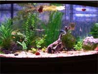 72 gallon fish tank