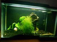 10 gallon aquarium